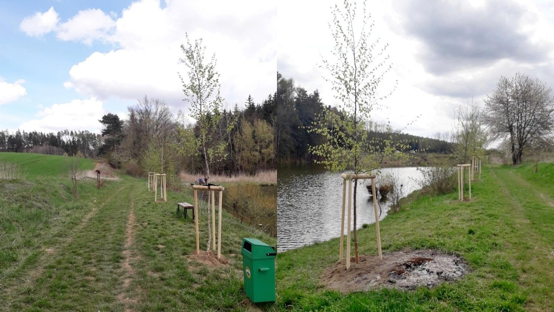 Výsadba stromů u rybníka v Petrovicích